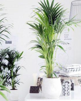 woonaccessoires - planten