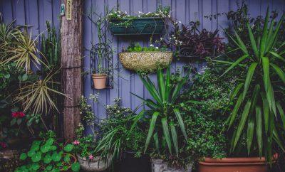 4 tips voor een duurzamere tuin