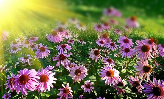 Hoe creëer je een tuin met veel kleur
